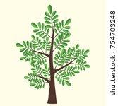 vector illustration of acacia... | Shutterstock .eps vector #754703248