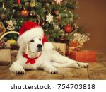 christmas dog  white puppy... | Shutterstock . vector #754703818