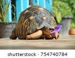 portrait of radiated tortoise... | Shutterstock . vector #754740784