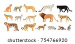 Stock vector collection of different wild and domestic cats exotic animals of felidae family isolated on white 754766920
