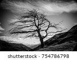 old tree   new zealand.   Shutterstock . vector #754786798