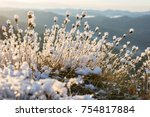 fluffy plant covered with snow  ... | Shutterstock . vector #754817884