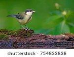 wildlife scene from forest lake.... | Shutterstock . vector #754833838