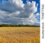 yellow sea of wheat on the... | Shutterstock . vector #754877560