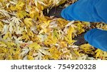 Small photo of autumn maple leaves rustle underfoot