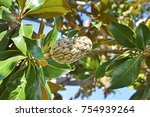 nature  magnolia plant with... | Shutterstock . vector #754939264
