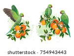 tropical summer arrangements... | Shutterstock .eps vector #754943443