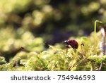 Dreamer.the Bug Is The Ladybug...