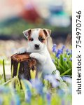 Stock photo little puppy and the stump 754970746