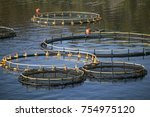 rounded cages for breeding of...   Shutterstock . vector #754975120