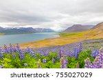 eyjafjordur fiord iceland in... | Shutterstock . vector #755027029