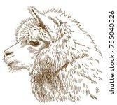 vector antique engraving...   Shutterstock .eps vector #755040526