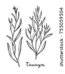 tarragon set. ink sketch... | Shutterstock .eps vector #755059504