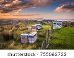 bee hives in many colors in... | Shutterstock . vector #755062723