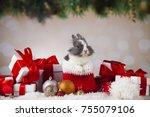 animal  rabbit  bunny on... | Shutterstock . vector #755079106