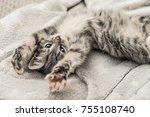 cute little grey kitten lying... | Shutterstock . vector #755108740