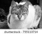 Black And White Shot Of Cat...