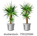 two yucca plants in pots  yucca ... | Shutterstock .eps vector #755129284