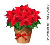 poinsettia plant in pot with... | Shutterstock .eps vector #755129290