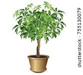schefflera plant in pot ... | Shutterstock .eps vector #755130079