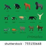 primate species set cartoon... | Shutterstock .eps vector #755150668
