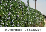 flower and greenery wall  | Shutterstock . vector #755230294