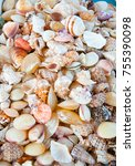 cockle shell displayed for sale ... | Shutterstock . vector #755390098