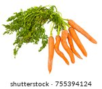 cluster of raw carrots from the ... | Shutterstock . vector #755394124
