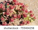 Red Flowers Blooming In Dry...