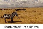 zebra  wildebeest  landscape... | Shutterstock . vector #755404498