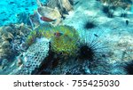 coral reef with sea urchins.... | Shutterstock . vector #755425030