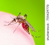 Small photo of Yellow Fever, Malaria or Zika Virus Infected Mosquito Insect Macro
