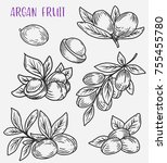 sketches of argan branches or... | Shutterstock .eps vector #755455780
