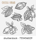 sketches of cacao plant or... | Shutterstock .eps vector #755456029