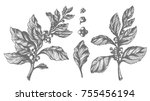 set of mate tree branches with... | Shutterstock . vector #755456194