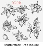 sketches of jojoba branches.... | Shutterstock .eps vector #755456380