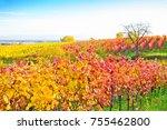 vineyards in the pfalz  germany | Shutterstock . vector #755462800