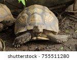 close up african spurred... | Shutterstock . vector #755511280