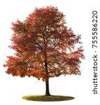 Big Autumn Tree Changing Leave...