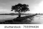 black and white of  tree and... | Shutterstock . vector #755594434