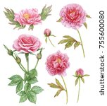 pink flower collection.... | Shutterstock . vector #755600080