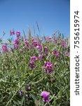 Wildflowers Growing On Rocky...