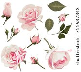 realistic roses vector clip art ... | Shutterstock .eps vector #755637343