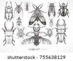 insect collection. hand drawn... | Shutterstock .eps vector #755638129