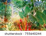 surreal colors of fantasy... | Shutterstock . vector #755640244