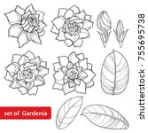 vector set with outline... | Shutterstock .eps vector #755695738