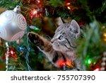 Cute Tabby Kitten In Christmas...