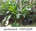 Small photo of Tires left in the nature, lack of respect for the earth.