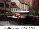 traveling with a dog. pet in an ... | Shutterstock . vector #755716768