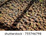 tree planting uganda style ... | Shutterstock . vector #755746798